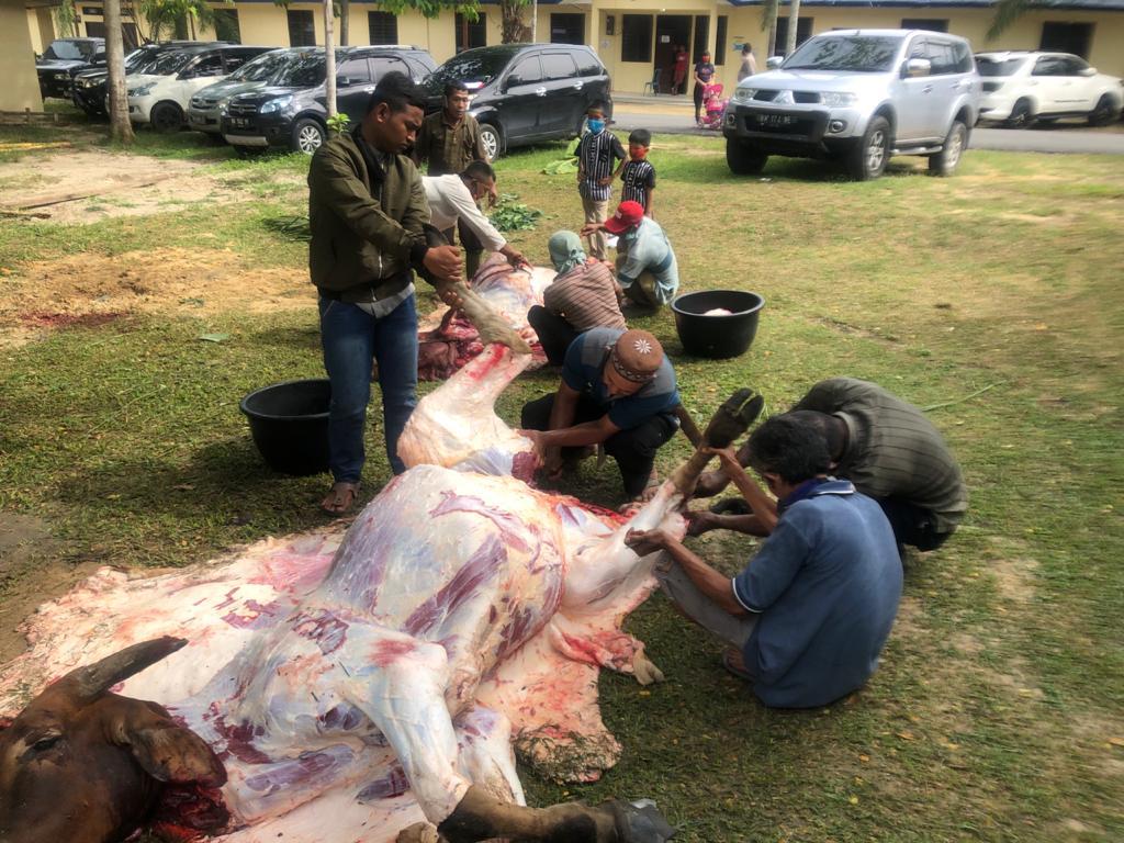 Polres Rohil Gelar Pemotongan 57 Ekor Hewan Qurban