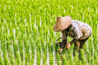 Nilai Tukar Petani Riau Tertinggi di Sumatera