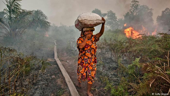 Titik Api di Riau, Terbanyak di Siak dan Inhil
